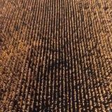 空中寄生虫视图从上面在收获以后的麦地 免版税图库摄影