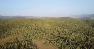 空中射击:在绿色森林的飞行在喀尔巴阡山脉 股票视频
