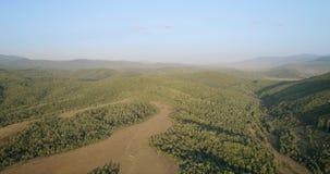 空中射击:在绿色森林的飞行在喀尔巴阡山脉 股票录像