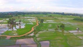 空中射击米领域和山景 股票视频