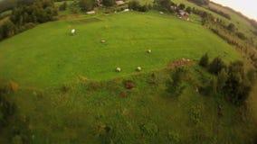 空中射击 飞行在领域,树在村庄附近 股票视频