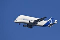 空中巴士A300 - 600T白海豚-空运 免版税库存图片