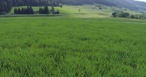 空中录影,在高速公路附近的绿色领域在森林背景中  股票视频