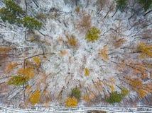空中明亮的云彩具球果包括的冠森林点燃了视图冬天的上升的雪星期日晴朗的日出时间结构树 免版税库存图片