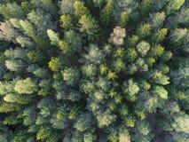 空中森林视图 免版税库存照片