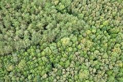 空中森林视图 免版税图库摄影