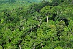 空中森林视图 库存图片