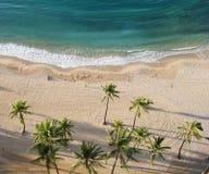 空中海滩棕榈树视图 免版税库存图片