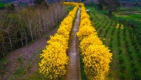 空中照片明亮的黄色开花花 免版税库存图片