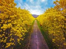空中照片明亮的黄色开花花 免版税库存照片