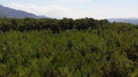 空中爱琴海杉木的森林 股票录像