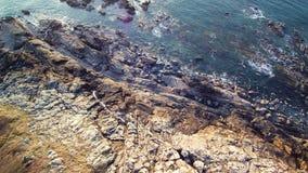 空中盘旋在峭壁和海洋在布里坦尼,4K序列1 2 -在五颜六色的荒野、石南花、岩石和礁石上 股票视频