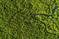 空中美洲红树森林顶视图 免版税库存照片