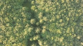 空中背景有具球果森林鸟瞰图 影视素材