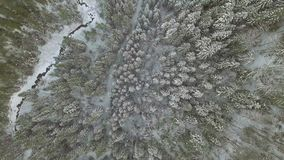 空中背景 在冬天积雪的树上的上流在冷的山森林里 股票录像