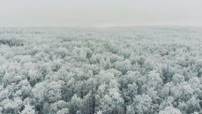 空中英尺长度北极寒带草原 股票录像
