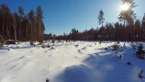 空中英尺长度 低空飞行 33c 1月横向俄国温度ural冬天 晴朗的日 冻森林 股票视频