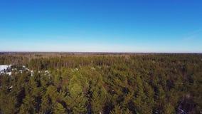 空中英尺长度 33c 1月横向俄国温度ural冬天 晴朗的日 冻森林 股票视频