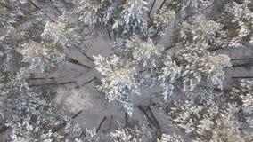空中跨线桥积雪的杉木 影视素材
