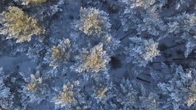空中跨线桥积雪的杉木 股票录像