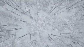空中跨线桥积雪的桦树 影视素材
