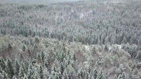 空中跨线桥结冰的多雪的云杉的森林 股票视频