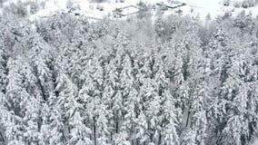 空中跨线桥结冰的多雪的云杉的森林 股票录像