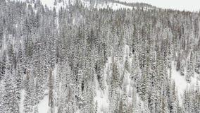 空中跨线桥被射击冬天云杉和杉木用雪盖的林木, 影视素材