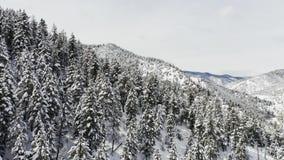 空中跨线桥被射击冬天云杉和杉木用雪盖的林木 影视素材