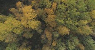 空中顶视图射击了秋天树在森林里在10月 库存图片