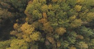 空中顶视图射击了秋天树在森林里在10月 免版税图库摄影