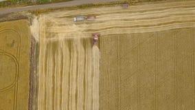 空中顶视图联合收割机从上面会集麦子在日落靠近卡车 收获粮田,庄稼 股票视频