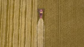 空中顶视图联合收割机从上面会集麦子在日落 收获粮田,庄稼季节 4K 股票录像