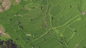 空中风景绿色米大阳台 寄生虫视图绿色乡下领域的米种植园在亚洲村庄 种田和 影视素材