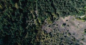 空中鸟眼睛被射击在杉树有大反差的山森林 股票录像