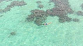 空中:潜航在珊瑚礁热带加勒比海的妇女 股票视频