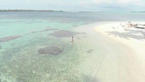 空中:潜航在珊瑚礁热带加勒比海的妇女 股票录像