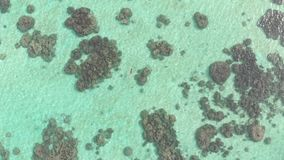 空中:潜航在珊瑚礁热带加勒比海的妇女 影视素材