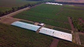 空中-在葡萄被种植的温室的飞行 老温室 股票录像