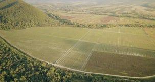 空中viea :榛树种植园有风景全景 股票录像