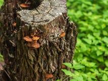 空心树桩用生长对此的五颜六色的蘑菇,围拢由在森林地板上的豪华的植被 免版税图库摄影