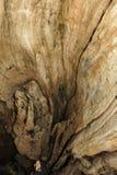 空心漂流木头 免版税图库摄影