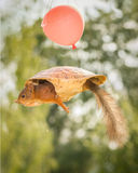 空气乌龟 图库摄影