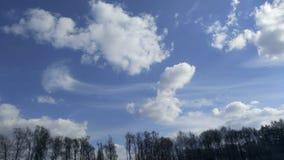 空气气蚀流程在云杉的森林上的积云之间 库存照片