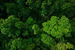 从空气的雨林在Kuranda,昆士兰,澳大利亚附近 免版税库存照片