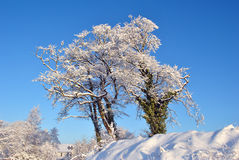 空白冬天 免版税库存图片