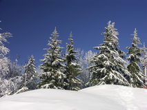 空白冬天 库存图片