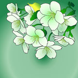 空白和绿色花 免版税库存图片