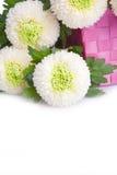 空白土耳其康乃馨花束  免版税图库摄影