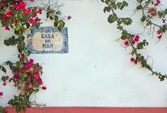 空白墙壁和bloming的花 免版税库存图片
